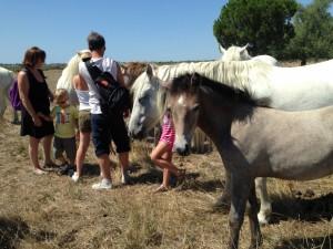 Rencontre avec les chevaux de Camargue pour le bonheur des grands et des petits !